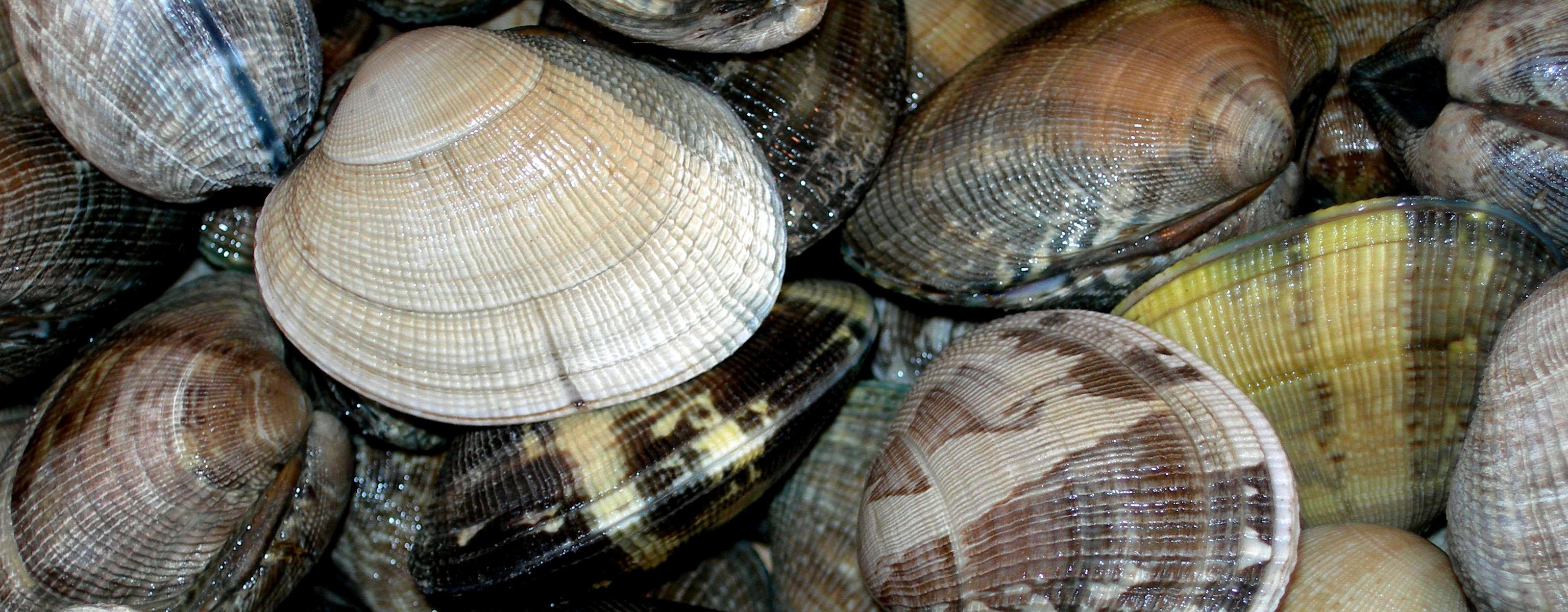 ATAO – restaurant de fruits de mer