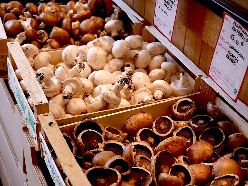 Diverses sortes de champignons