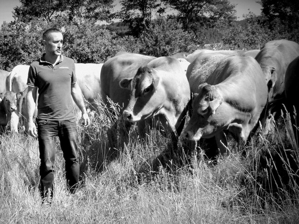 Pascal Rouy avec ses bovins