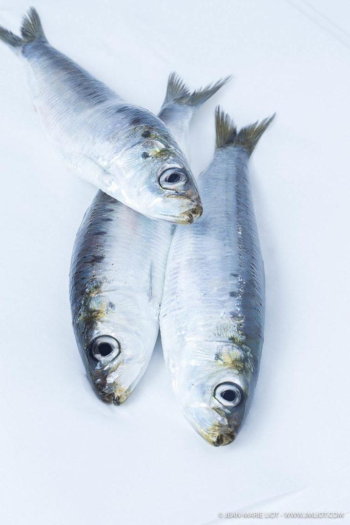 Jolis poissons argentés